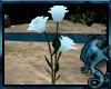 (LD)Enchanted Rose: v3