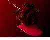 rose of blood