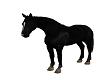 BLACK WALKING HORSE