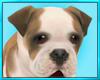 Bulldog Puppy Decor