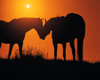 Horses in the Sunset Pic