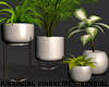 Interior Modern Plants