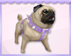 Action Kawaii Pug!