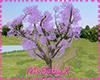 [1V4] Cherry tree Purple