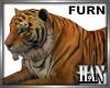 [H]Tiger ► Furn
