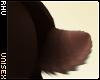 . Teddi | Tail