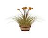 Fall Iris Plant