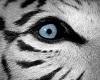 White Tiger Fur