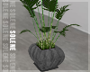 s | Modern Plant