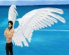 White anim angel wings