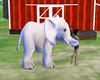 BABY ELEPHANT  WHITE