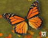 MayeFlying Butterfly