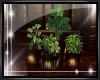 {SIN}~ EXPRESSIONZ PLANT