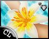 .C Lily Luau Bracelet R