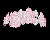 rose crown pink
