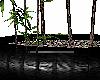 SweetAsian Bamboo Plant2