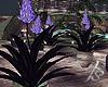 |FS. Slive Flower