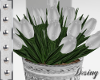 Tulips| Wedding Plant