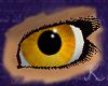Amber Eyes F