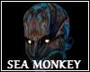 Sea Monkey No Hair