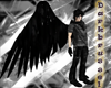 [D] Single Black Wing R