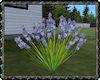 ⚡ Lavender Flower