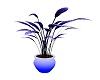 Blue Moon Vase Plant