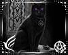 Wicca Kitty Frame v5