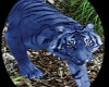 Blue Tiger Pet