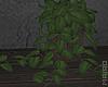 ᴍ| Little Plant.
