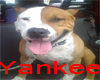[BB] Yankee (forniture)