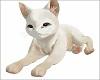 White Chill Cat