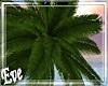 c Palm Tree