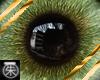 }T{ Moss eyes male