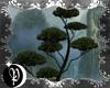 🌙 kuromatsu tree