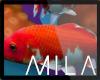 MB: RA KOI FISH