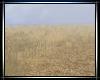 ❣  Wheat Fields