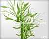 .LDs. :I:M:V: plant2