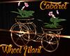 [M] Cabaret Wheel Plant