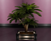 Potted Palm !!!