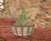 Desert Potted cactus