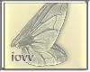 Iv-Wings