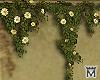 May�Wall vines