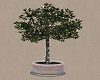 Potted tree with lights