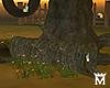 MayeButterfly Tree