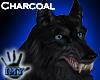 |Imy| Wolf Head CH - F