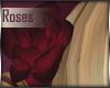 +Diana+ Hair Roses