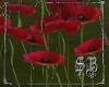 SB Flower Field