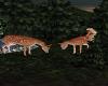 Fun With Deer
