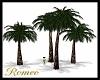 Desert Isle Palm Trees